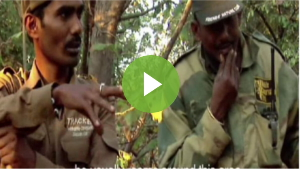Lion Trackers of Gir