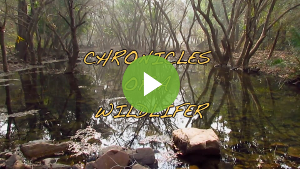 Chronicles of a Wildlifer
